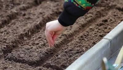 Как измерить температуру почвы обычным термометром? Дачникам на заметку