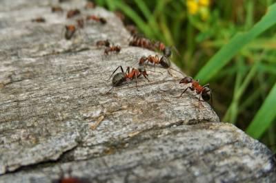 10 советов: как избавиться от муравьёв