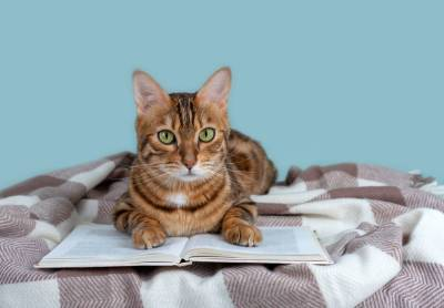 Заметки кота Феофана. Как живет кошачья семья?