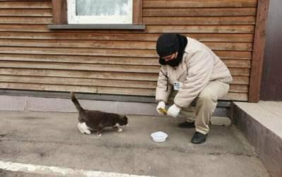 5 советов, как продуктивно помогать бездомным животным, не навредив им